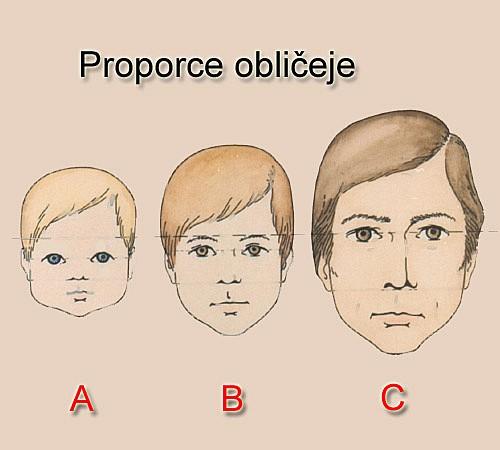 proporce obličeje